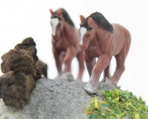 Horse Rock-05