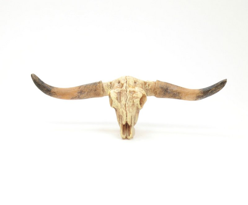Old West Dry Cattle Skull - #118-1008