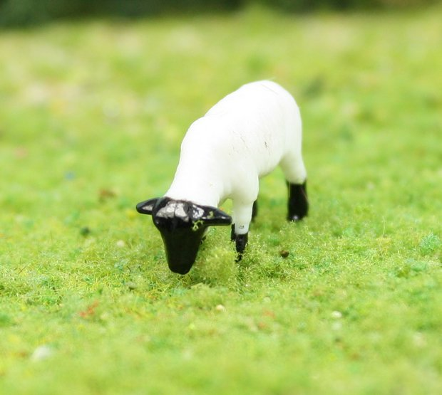 "Sheep - 3/4"" - Set of 6 - 102-2047"